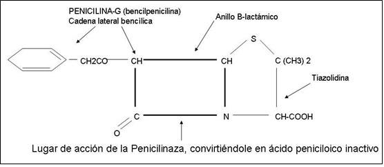 peninc