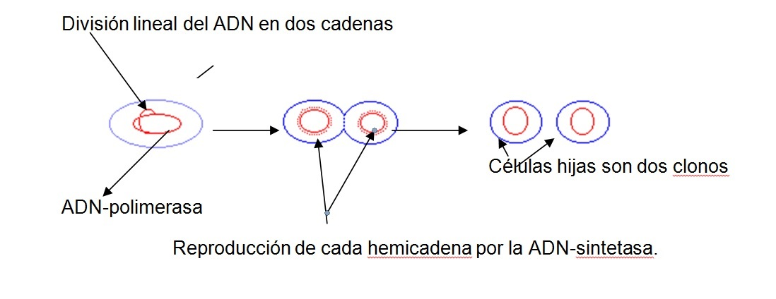 Division lineal
